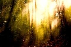 Запачканная предпосылка деревьев Стоковая Фотография RF