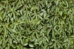 Запачканная предпосылка зеленых растений Стоковые Фото