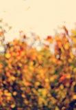 Запачканная предпосылка золотых листьев осени с bokeh Стоковые Фотографии RF