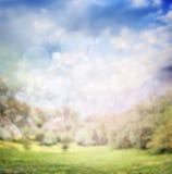 Запачканная предпосылка природы лета или весны в саде или парке Стоковое Изображение