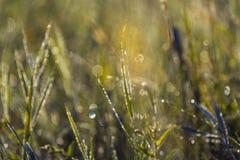 Запачканная предпосылка с bokeh и не засевает никакой фокус травой Стоковые Фото
