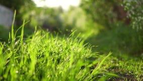 Запачканная предпосылка травы сток-видео