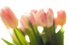 Запачканная съемка довольно розовых и красных тюльпанов Стоковая Фотография