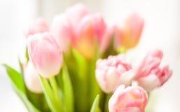 Запачканная съемка свежих розовых тюльпанов Стоковые Изображения RF