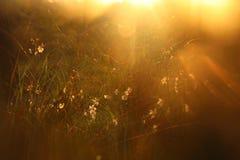 запачканное абстрактное фото взрыва света захода солнца среди цветков в лесе и bokeh стоковое фото