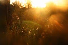 запачканное абстрактное фото взрыва света захода солнца среди цветков в лесе и bokeh стоковое изображение