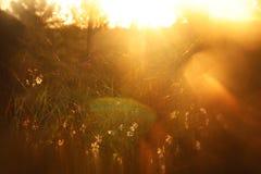 запачканное абстрактное фото взрыва света захода солнца среди цветков в лесе и bokeh стоковые фото