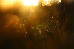 запачканное абстрактное фото взрыва света захода солнца среди цветков в лесе и bokeh стоковая фотография rf