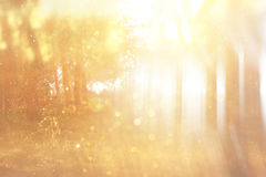 Запачканное абстрактное фото света разрывало среди деревьев и светов bokeh яркого блеска фильтрованное изображение и текстурирова стоковые фотографии rf