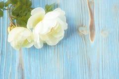 Запачканное белое одичалое подняло Стоковые Фото