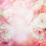 Запачканное бледное - розовая флористическая предпосылка Стоковая Фотография