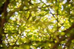 Запачканное дерево лист абстрактная весна предпосылки Стоковые Фото