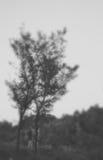 Запачканное дерево Стоковая Фотография RF