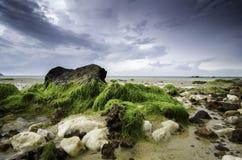 Запачканное и мягкое изображение белого и коричневого влажного камня покрытого с зеленым мхом Стоковое Изображение RF
