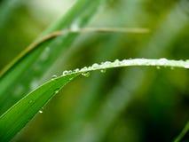 запачканное лезвие предпосылки падает вода лужка травы Стоковые Изображения RF