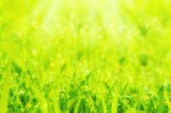 Запачканное мечтательное мягкое backg весны фокуса или природы лета абстрактное Стоковые Изображения RF