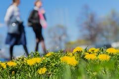 Запачканные женщины идя в парк, весенний сезон, луг зеленой травы, яркие желтые молодые одуванчики, космос экземпляра Аннотация Стоковое Изображение