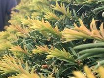 Запачканные зеленые и желтые листья в изобилии стоковые изображения rf