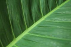 Запачканные зеленые лист Абстрактной предпосылка текстурированная картиной стоковое фото