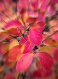 Запачканные красные листья осени стоковое фото rf