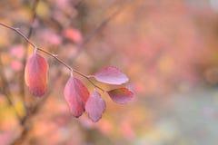 Запачканные осенью листья красного цвета предпосылки Стоковая Фотография RF