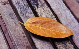Запачканные света bokeh через листья trea Стоковые Фото