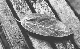 Запачканные света bokeh через листья trea Стоковая Фотография RF