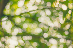 Запачканные света bokeh через листья trea Стоковые Фотографии RF