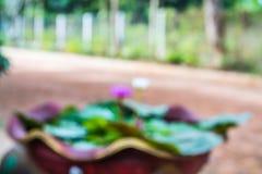 Запачканный бака цветков лотоса для предпосылки Стоковая Фотография RF