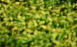 запачканный зеленого растения Стоковые Изображения RF