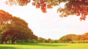Запачканный парк, естественная предпосылка стоковое изображение rf
