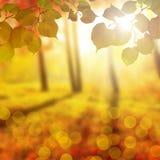 Запачканный парк осени, предпосылка природы красочная желтая стоковое изображение rf