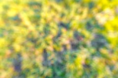 Запачканный парк с предпосылкой bokeh, сезонной природой стоковая фотография