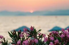 Запачканный пляж захода солнца с розовыми цветками на переднем плане стоковое фото rf