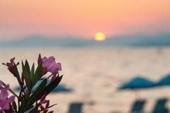 Запачканный пляж захода солнца с розовыми цветками на переднем плане стоковое изображение rf