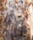 Запачканный ствола дерева Стоковые Изображения RF