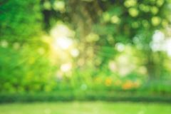 Запачканный bokeh деревьев в предпосылке утра сада стоковые изображения rf