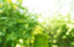 Запачканный bokeh деревьев в утре сада стоковое изображение