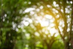 Запачканный bokeh на предпосылке листьев стоковое изображение
