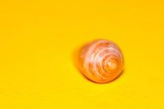 Запачканный seashell на желтой предпосылке Стоковая Фотография RF