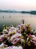 Западное озеро Стоковые Фото