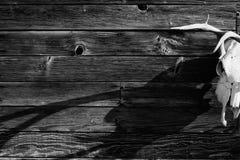 западное одичалое Стоковая Фотография RF