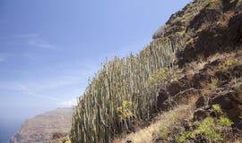 Западное Gran Canaria, май Стоковые Фото
