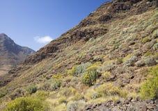 Западное Gran Canaria, май Стоковая Фотография RF