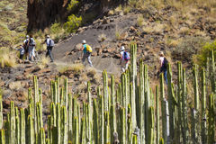 Западное Gran Canaria, май Стоковые Фотографии RF
