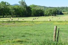 Западный зеленый цвет поля сена фермеров горы NC Стоковые Изображения RF