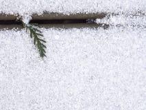 Западный красный кедр покидает верхняя левая сторона Стоковые Фотографии RF