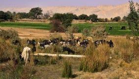 Западный оазис пустыни Kharga, Египта Стоковая Фотография RF
