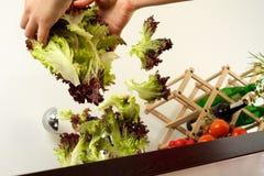 запиток салата Стоковая Фотография RF