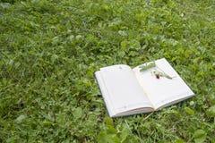 Запишите, клубники лежа на зеленой лужайке леса стоковое изображение rf